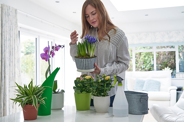 A woman cares for plants in home.