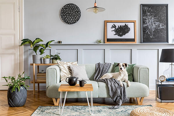 A dog is on a couch in a home's living room
